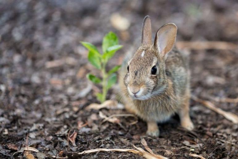 Baby Rabbit Outside