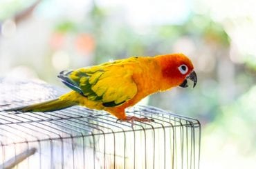 Concure on Cage