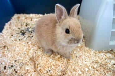 Small Rabbit in Cage