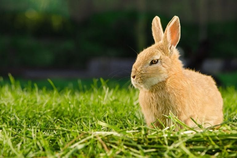 Angry Looking Rabbit