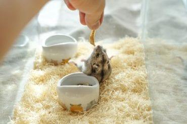Hamster Not Eating