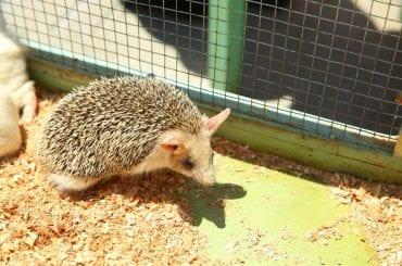 Hedgehog Can't Poop