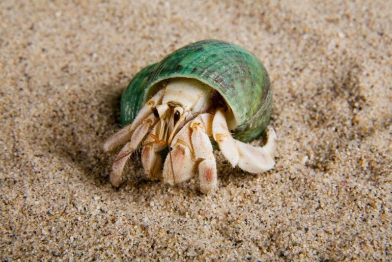 Hermit Crab Not Moving