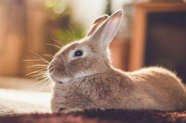 Rabbit on Bed