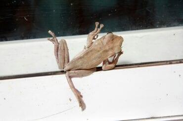 Frog Climbing Glass