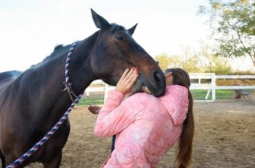 Horse Nibbling Person