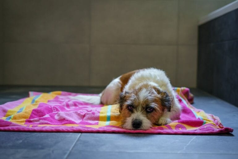 Dog Laying Down in Bathroom