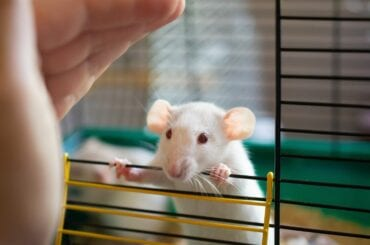Mouse in Cage